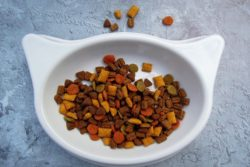 10 Best Cat Food in India for Healthy Growth of  Your Feline