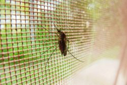 Which Mosquito Net is Best for Windows?